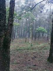 Ba Vì National Park (nhoc_kira_tn9x) Tags: bavì nationalpark hanoi vietnam