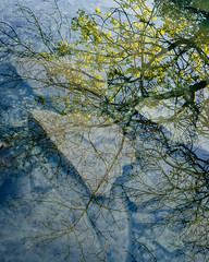 Spring Leaf (colinbell.photography) Tags: