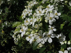 Green and white: Spring (Christine Dolan...back for a while) Tags: spring flowers parks