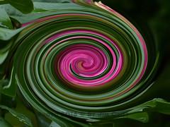 Twirl 26 (PhotosbyJim) Tags: twirl patterns
