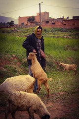 Goats herders, Atlas Mountains (micheledini) Tags: mountain goats herders marocco travel travelling memories streetphotography man worker outdoors culture different