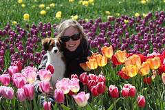 Tulpenroute met Yerke (NLHank) Tags: tulpen tulips flowers bollenvelden noordoostpolder nop tulpenroute tulpenfestival holland nederland netherlands nlhank canon eos 7d eos7d mkii 2017 yerke kooikerhondje dog pet hond kooiker anke