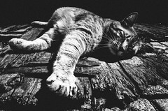 pads, paws and claws (matthias hämmerly) Tags: cat kitty blackandwhite bw bandw monochrom monochrome street streetphotography grain contrast ricoh sleepy nap relaxed sun light shadow dark paw katze wood sunbath stretch nice black white gr tiger animal animals wild tier paws monday easter eastermonday strasse warm