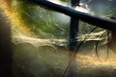 Toile d'araignée - Spider web (Chris, photographe de Nice (French Riviera)) Tags: helios44m4 helios araignée spider abstract abstrait abstraction modernart artgalleryandmuseums artcontemporain artmoderne vintage insecte nature