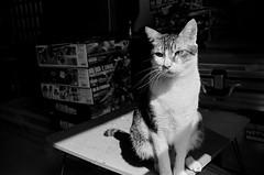 Leica_m_BW_6243_M35F14A_Pan400 (OPTIK AXIS) Tags: ライカ rf mp85 カメラ camera summiluxm 135 銀塩 写真 底片 膠卷 taiwan 台灣 ライカmレンズ 単焦点レンズ フィルム film analoguephotography 白黑 黑白 blackandwhite garylevel monochromatic blackandwhitefilm ilfordpan400 cat 貓 猫 ねこ