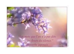 P2270054 (cowsandgirl71) Tags: panasonic fz200 fleurs couleur cowsandgirl71