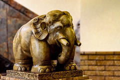 Elephant Statue of Tsukiji Honganji Temple : 築地本願寺の象の像 (Dakiny) Tags: 2017 spring april japan tokyo chuo chuoward tsukiji city street indoor temple honganji tsukijihonganjitemple architecture japanesearchitecture interior animal statue nikon d7000 sigma 1770mm f284 dc macro os hsm sigma1770mmf284dcmacrooshsm nikonclubit