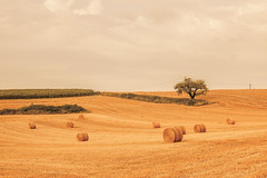 _Q9A5479 (gaujourfrancoise) Tags: france southwest sudouest charente fields champs été summer ocher ocre