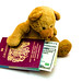 Travel Ted