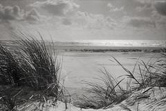 (tmkbnn) Tags: prakticabx20 slr singlelensreflex smallformat 35mm 135 film filmphotography agfaphotoapx100 bw blackandwhite denmark beach clouds beachgrass tomek bwfp