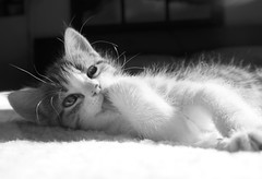 SAM_1816 (mcg0011) Tags: gatito kitty cute pet mascota manuelcarrasco felino feline