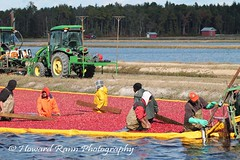 Whitesbog Cranberry Harvest  (119) (Framemaker 2014) Tags: whitesbog cranberry harvest burlington county chatsworth new jersey pinelands pine barrons southern united states america