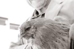 Mark and his friend (efo) Tags: bw film bird chicken mark hampton evisceratedlens om4t