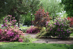 (ONE/MILLION) Tags: vacation travel visit tours events state capitol buildings sacramento california graffiti colorful outdoors landscape paint car crash parking old city streets historic history homes williestark onemillion flowers plants blooms blossoms roses memorial art artists