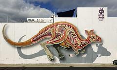 Nychos (J-C-M) Tags: street wall art streetart wallart graffiti grafitti artwork artistic artist nychos collingwood melbourne victoria australia paint painting kangaroo roo juddyroller