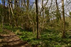 7W4A1193 (plebtheclown) Tags: cheddar gorge hiking walking outdoors landscape eos7dmark2 england somerset trees rocks