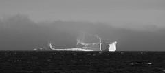 apr16 2017 27a (Delena Jane) Tags: delenajane macro newfoundland ngc pentaxart canada blackandwhite iceberg fog ferryland
