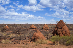 Termite Mounds near Port Headland Western Australia, the miners have a bit of a tradition of putting their old hard hats on top of them. (jasonsulda) Tags: termite mound port headland pilbara western australia hard hats landscape outback