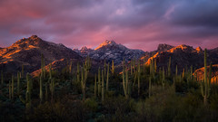 Sabino Canyon (gmcghee1) Tags: sabino canyon tucson arizona az sunset january catalina mountains saguaro cactus snow