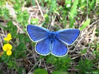 Butterfly 1228