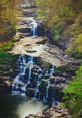 Falls of Clyde (Daniel Zwierzchowski) Tags: falls clyde new lanark scotland uk gb waterfalls water landscape canon t2i rebel 50mm marumi trees river natgeo travel nature natgeotravel stream waterfall creek