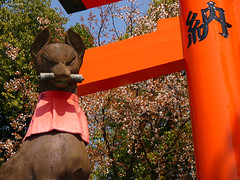 (worldbreeze) Tags: japan kyoto shrine inari fox    taisha fushimi