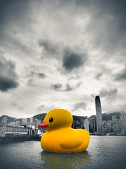 Rubber Duck (Tridentz) Tags: lumix duck rubber hong kong 28 sha tsim tsui omd 1235 em5
