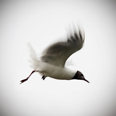 _DSC8651 (Alex Pezeshkmehr) Tags: sea motion blur birds wings long exposure flight