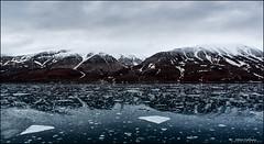 Svalbard in June (Hkon Kjllmoen, Norway) Tags: summer snow mountains reflection ice water norway svalbard isfjorden longyearbyen 2013 billefjorden