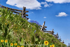 Just Over The Hill ... (Aspenbreeze) Tags: flowers mountains fence colorado wildflowers lupine woodfence aspenbreeze moonandbackphotography bevzuerlein ruggedfence muleearflowers coloradowildflowrs