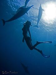 Silhouette (bodiver) Tags: silhouette hawaii dolphin freediving fins naia honaunau