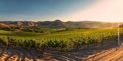Vines for Days (Silent G Photography) Tags: california ca panorama vineyard wine pano adobe santamaria nik centralcoast winecountry reallyrightstuff rrs centralcoastwine 2013 nikond800 markgvazdinskas silentgphotography tvc34l pg02llr silentgphoto ta3lbhk