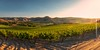 Vines for Days (Silent G Photography) Tags: california ca panorama vineyard wine pano adobe santamaria nik centralcoast winecountry reallyrightstuff rrs centralcoastwine 2013 nikond800 markgvazdinskas silentgphotography tvc34l pg02llr silentgphoto ta3lbhk