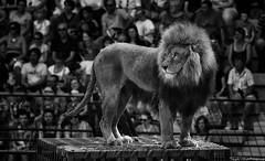 Le signe du triomphe - Puy du Fou (HDRvision) Tags: blackandwhite fight noiretblanc roman lion course arena char combat romain gladiator arène chevaux spectacle puydufou gladiateur lesignedutriomphe