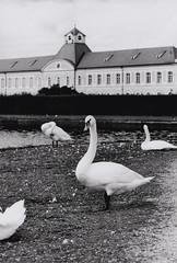 Untitled-14s (alex_ek173) Tags: film munich mnchen delta olympus 400 om ilford zuiko om2 nymphenburg