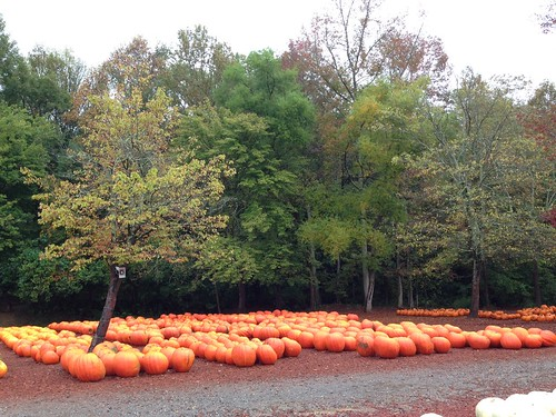 Pumpkin Trip