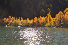 Herbstlicher Wald an einem sonnigen Tag am Lac de Derborence (mdoudin) Tags: autumn trees red lake green nature beautiful yellow forest landscape switzerland woods autumnal fort
