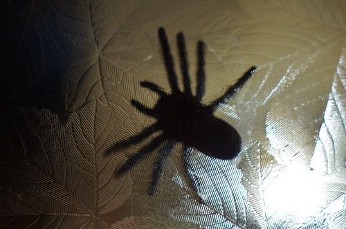 Spider under glass, Halloween 2013