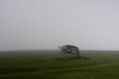 verso Beachy Head (Alberto Cameroni) Tags: leica uk verde green fog sussex brighton day nebbia beachyhead x1 inghilterra mattina southdownsway manica sussexuk errideluca
