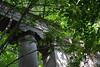 Dwasieden-01-Flickr (Miezenbraten) Tags: meer ruine schloss schlosspark weisse sassnitz marstall buchautor schlossruine hansemann marinestützpunkt ufermauer dwasieden ralflindemann