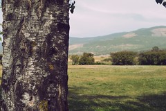 (b l a u m) Tags: summer mountain tree green nature field grass oregon landscape spring hill eugene bark trunk