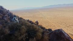 George the Mountain Dog (janel.erikson) Tags: cameraphone brown butte desert hiking scenic adventure steep atmosphericperspective mountainrange californiacity americanbulldog tehachapimountains winterinthedesert jaggedrocks steepashell stoicdog flickrandroidapp:filter=none