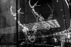 deerheads (Half of that) Tags: street mall photo citycenter pozna repo