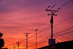 sunset strip (Joey Johannsen) Tags: sunset birds energy powerlines westlosangeles