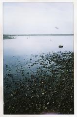 Dash Point (rickydekker) Tags: seattle film beach analog coast washington fuji snapshot grain pacificnorthwest fujifilm tacoma pnw desmoines instax fujicolor dashpoint instantfilm instaxwide instax210