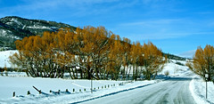 the road ahead (Rnoltenius) Tags: road blue winter snow mountains cold beauty colorado skies springs serene lonely steamboat mygearandme mygearandmepremium mygearandmebronze mygearandmesilver mygearandmegold mygearandmeplatinum mygearandmediamond