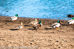 _DSC6566.jpg (orig_lowolf) Tags: people usa dog bird oregon nikon lakeoswego georgerogerspark d300s sigmaaf150500mmf563apodgoshsm