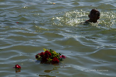 (Lucille Kanzawa) Tags: flores water gua mar bahia oferendas salvador offerings iemanj riovermelho festadeiemanj floresnomar meninonomar floresflutuandonomar