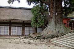 kasuga taisha shrine (7) (evan.chakroff) Tags: park japan woods shrine nara ksa kasugataisha naraprefecture evanchakroff chakroff ksajapan2013
