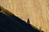 (Iyhon Chiu) Tags: california usa nature rock unitedstates yosemite yosemitenationalpark elcapitan 自然 岩 yosemitevalley 大自然 優聖美地 ヨセミテ 加州 2013 カリフォルニア 優勝美地 花崗岩 優勝美地國家公園 d7000 ヨセミテ国立公園